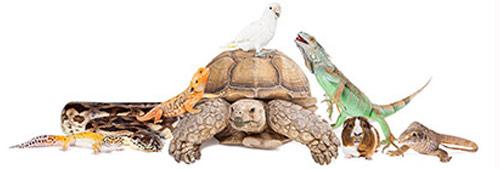 group-of-animals-wellesley-exotic-pet-vet
