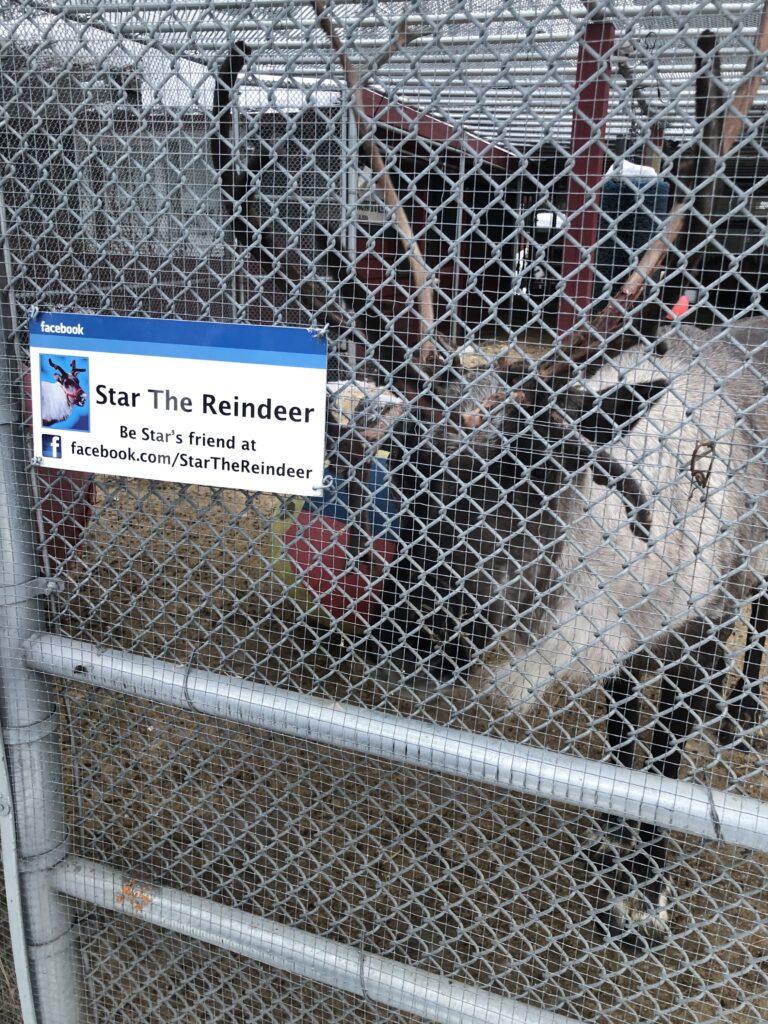 Reindeer in Alaska - Anchorage Tourist