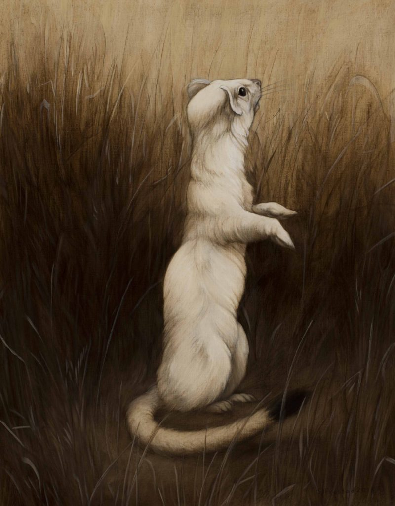 """Long-tailed Weasel, 2018. Graphite & oil on wood panel, 14x11"""". Sold"""