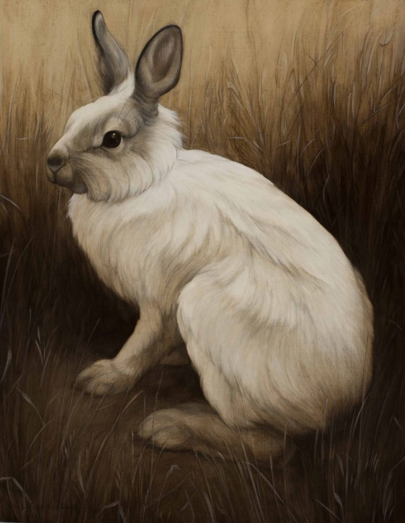 """Snowshoe Hare, 2018. Graphite & oil on wood panel, 14x11"""". Sold"""