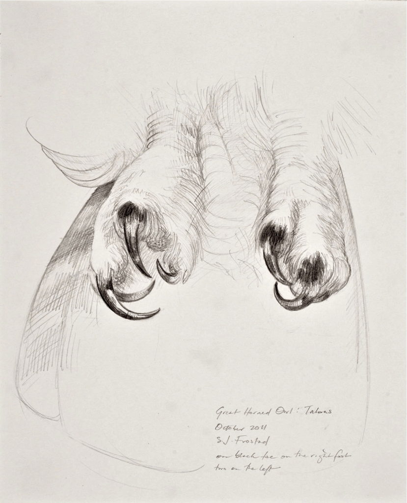 """Great-horned Owl: Talons, 2011. Graphite on paper, 10x8"""". 50."""