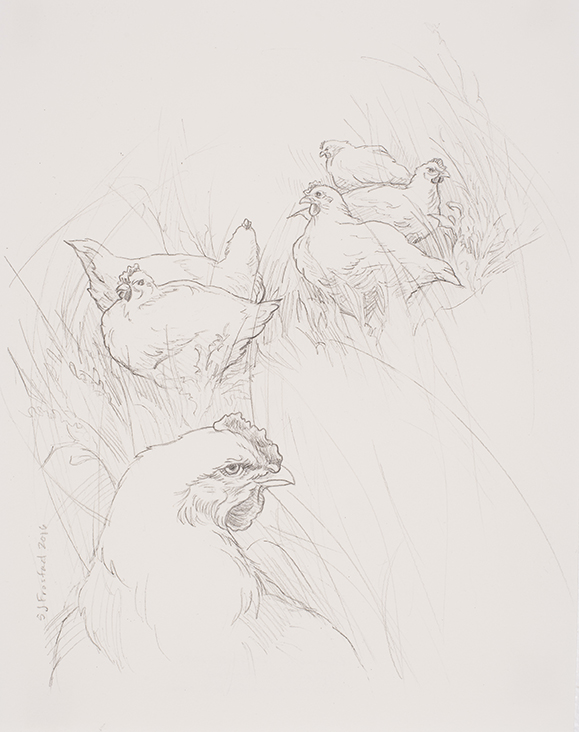 """Chickens in Tall Grass, 2016. Graphite on paper, 10x8"""" Sold"""