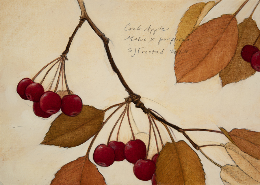 Crab Apples, 2020. Graphite & oil on wood panel Sold