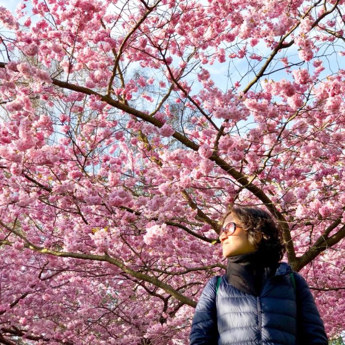 Shivya enjoying the gorgeous cherry blossom in Copenhagen.