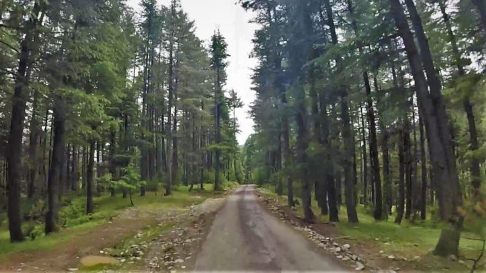 Such deserted roads with huge pine trees on both sides went on for a while.