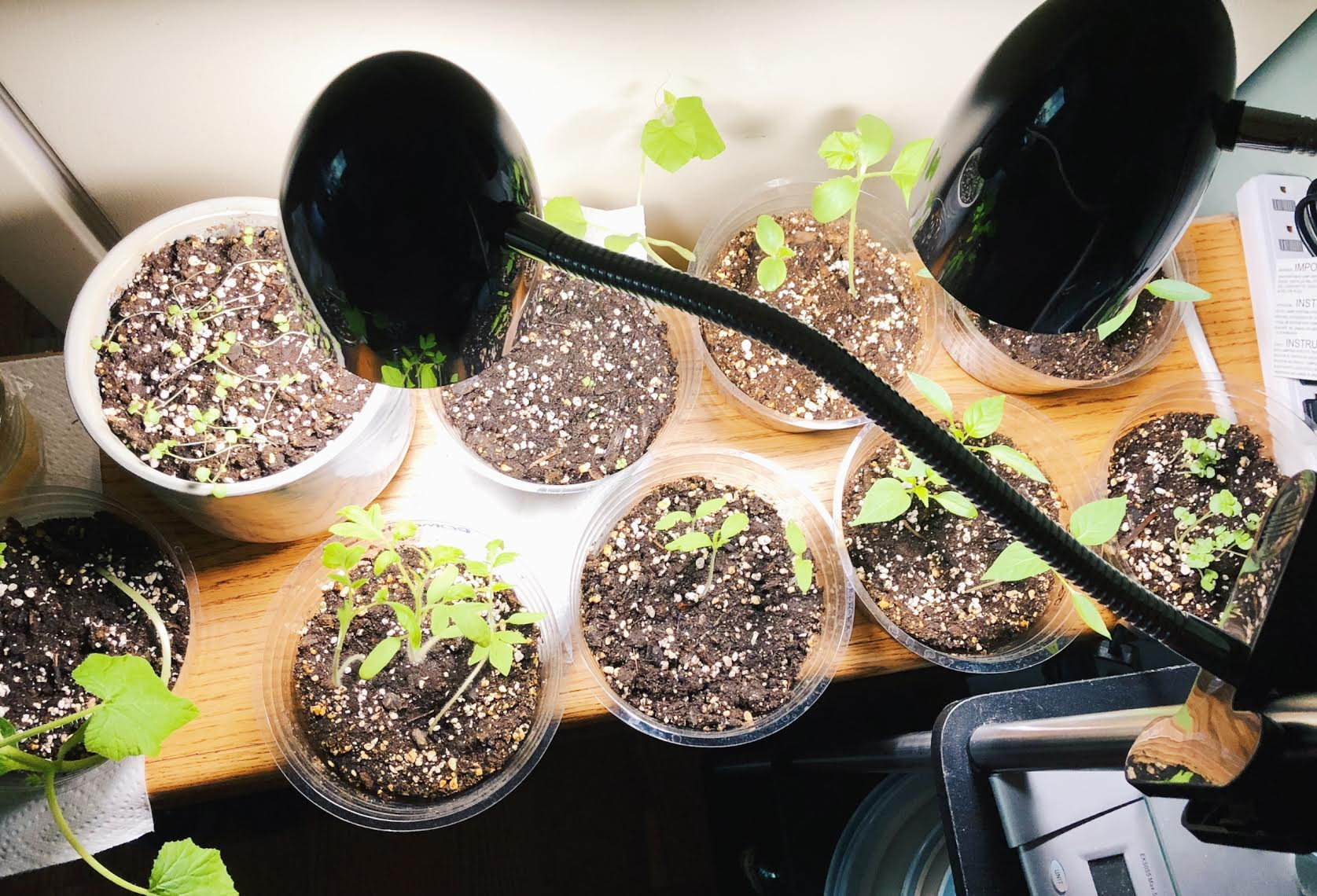 Read more about the article Garden Update: March 2018