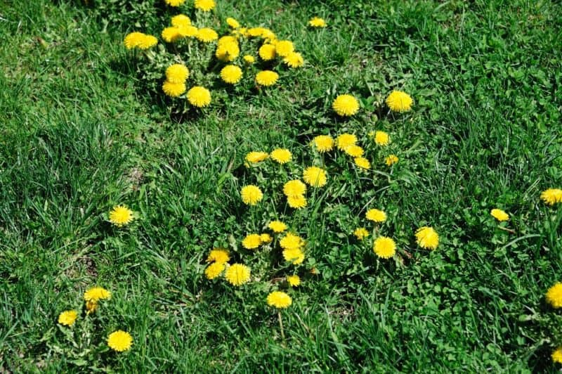 weed control cost