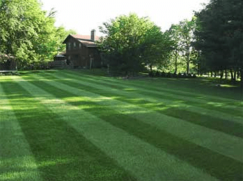 how much does lawn care cost
