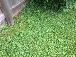 Broadleaf Weeds