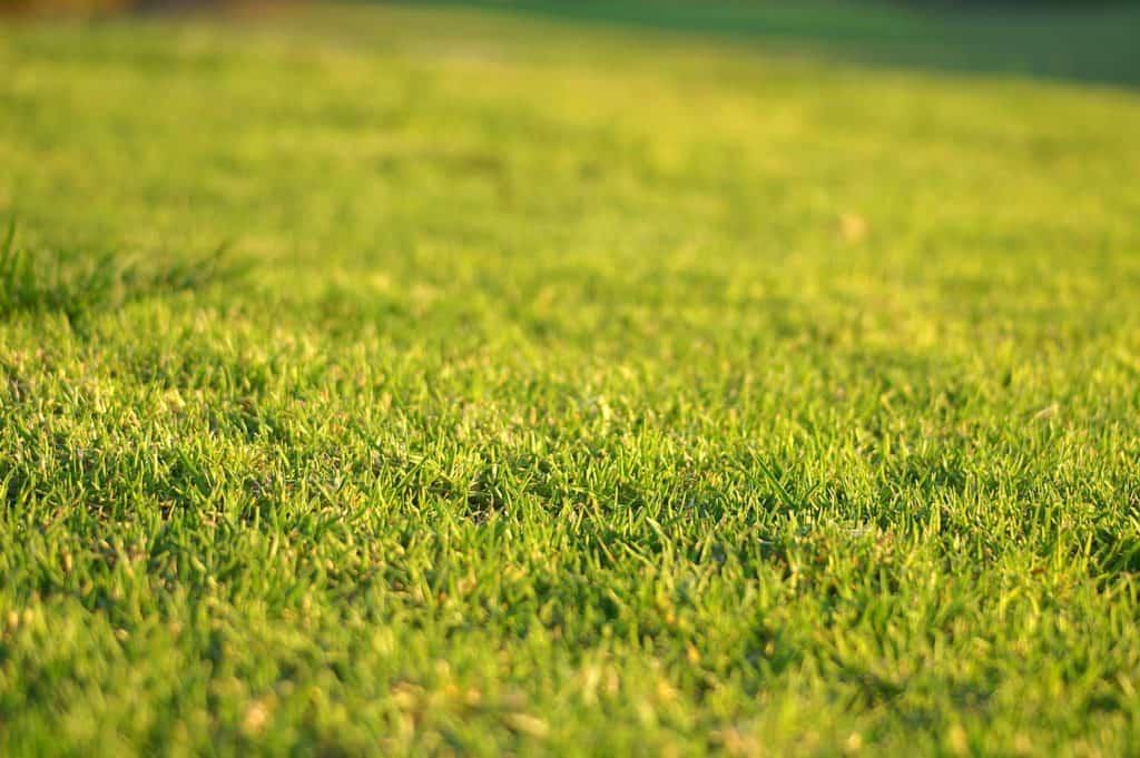 Lawn Renovation
