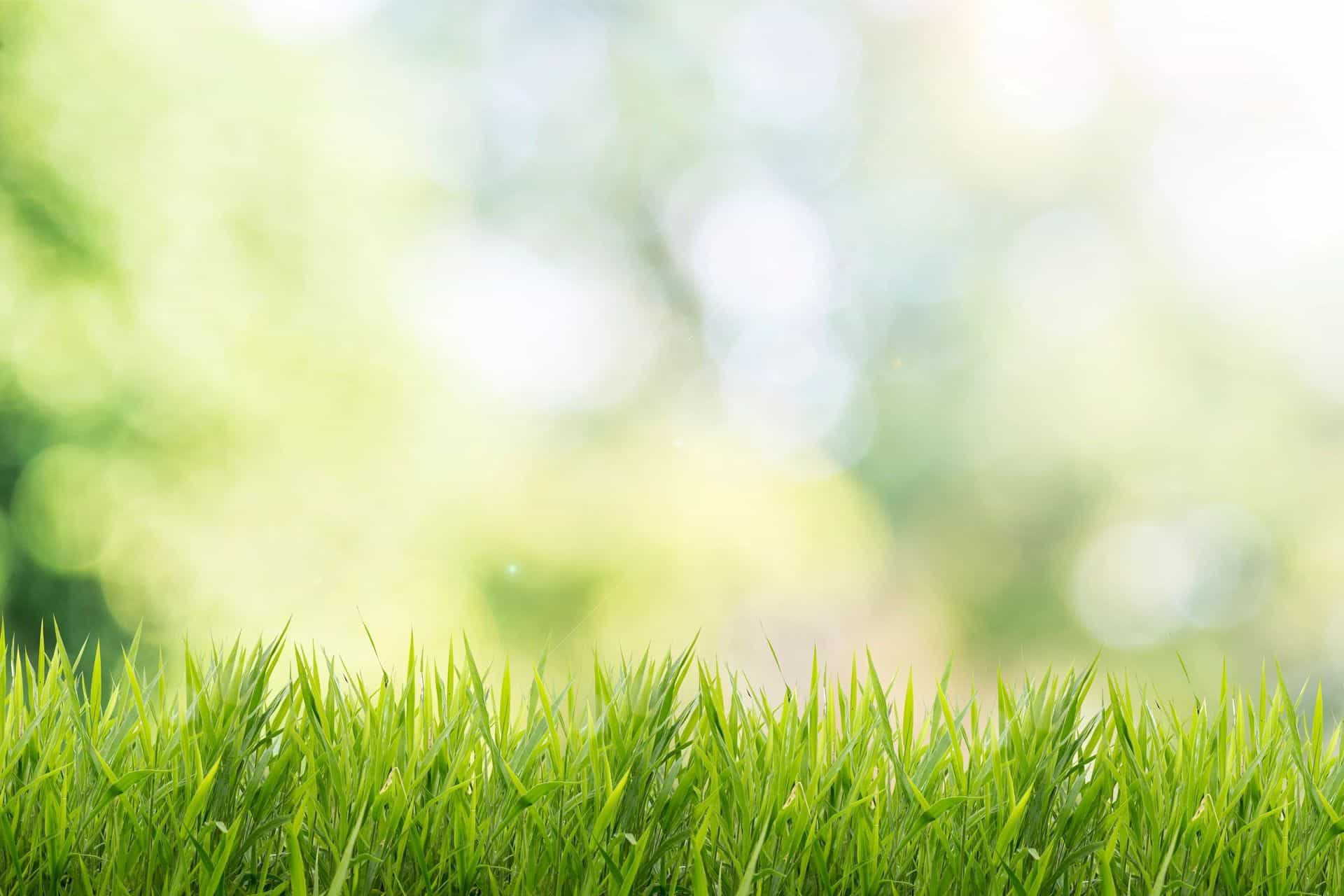 Lawn Care Cost