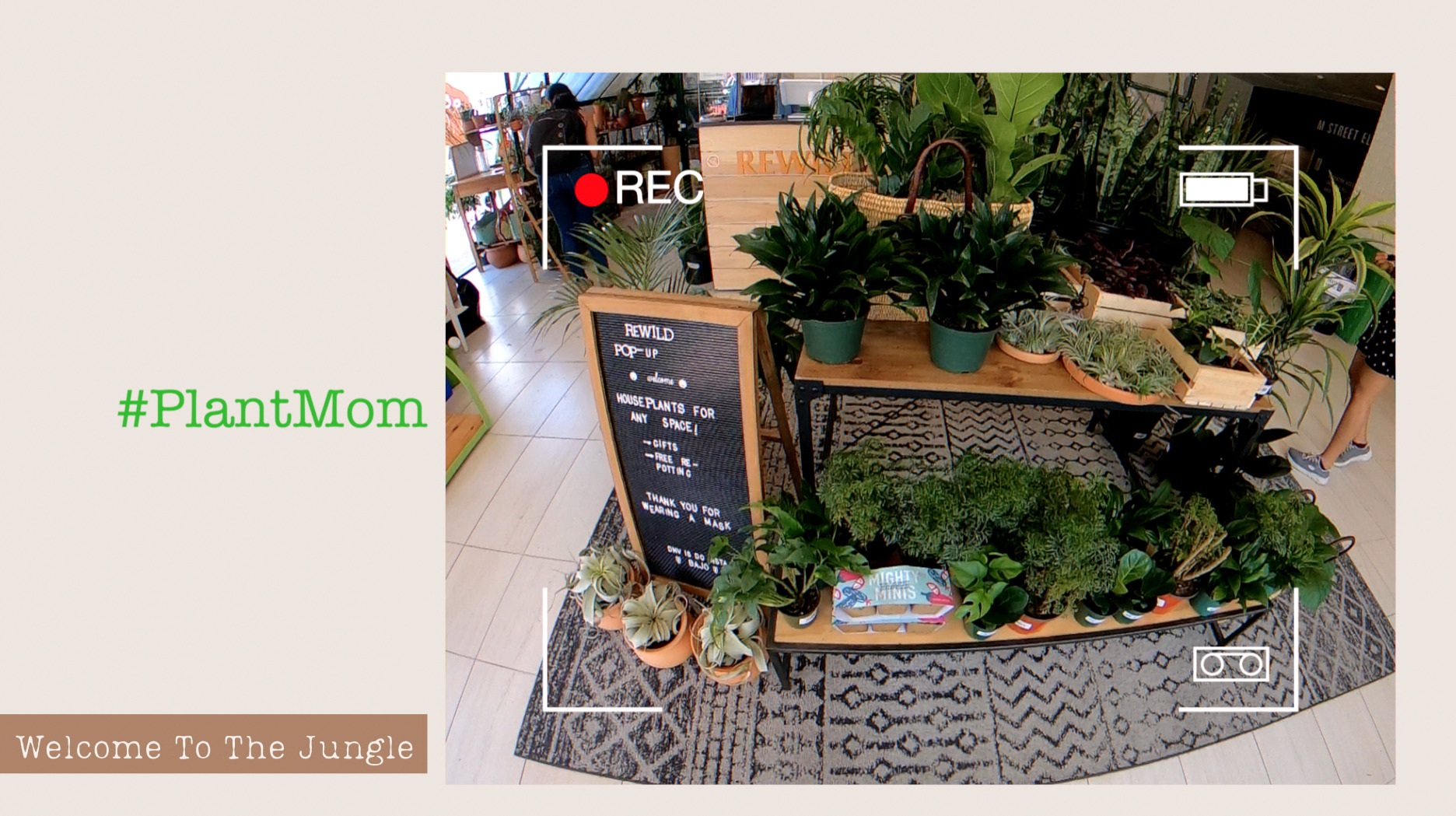 REWILD - Plant Nursery in Georgetown
