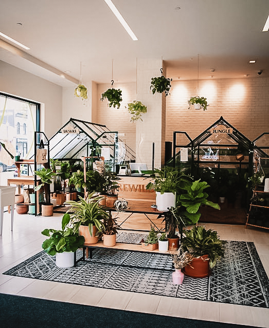 Image of the interior of REWILD plant nursery in Georgetown, DC