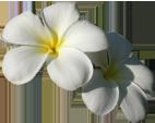 Pua Flower