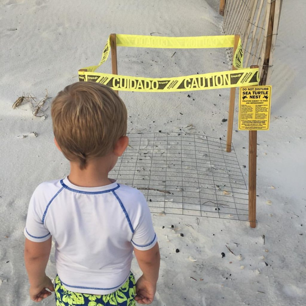 sea Turtle nests in Cape San Blas