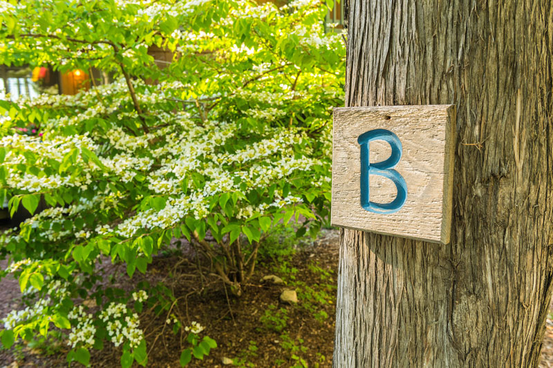 Tree with a wooden sign with the letter B