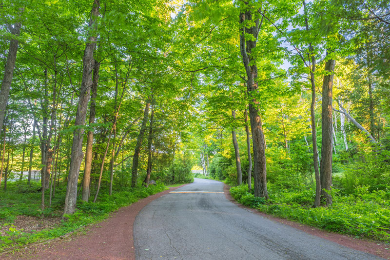 Door county road winding through sunlit trees