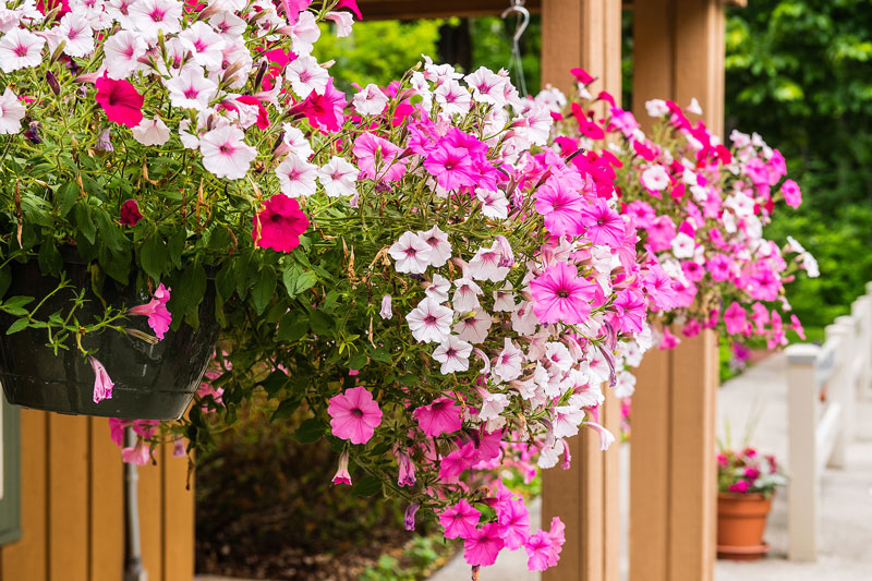 Flower box overflowing with pink, white and magenta blooms