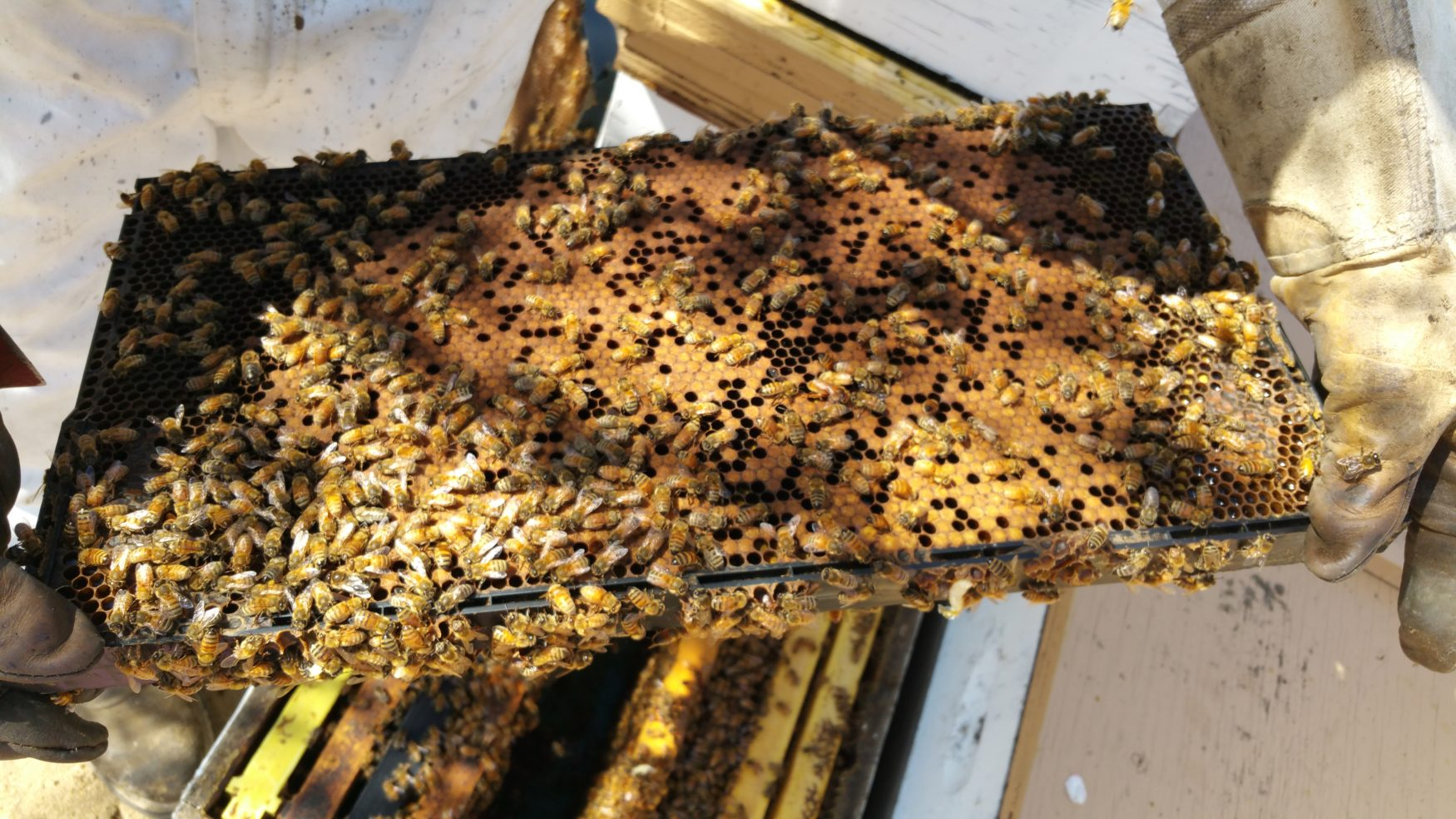 Hive Inspections