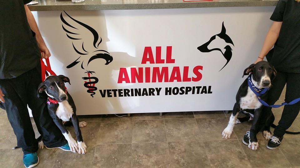 allanimals-veterinary.com