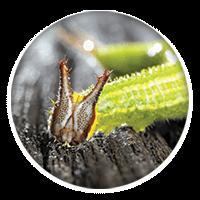 Caterpillar Close-up