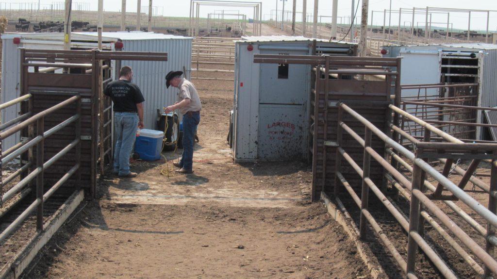 Three AI Barns for Breeding Project