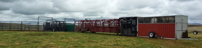 Daniels Alley, Rawhide Corral, Silencer Chute, and AI Barn for Breeding Project
