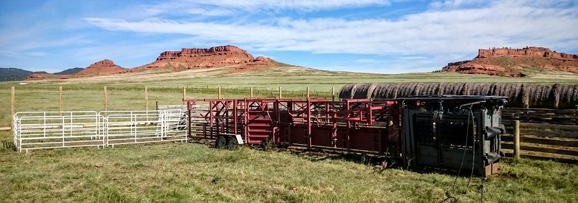 Portable Livestock Working Facility for AI project. Daniels Alley, Silencer Chute, and Bud Box.