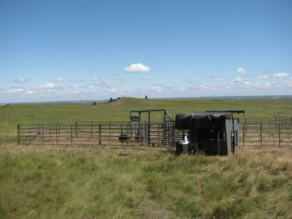 Ranch model Silencer Chute in Pasture with Rawhide Portable Corrals