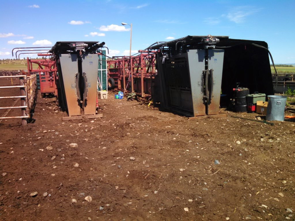 Two Daniels alleyways and SILENCER chutes for a breeding project.