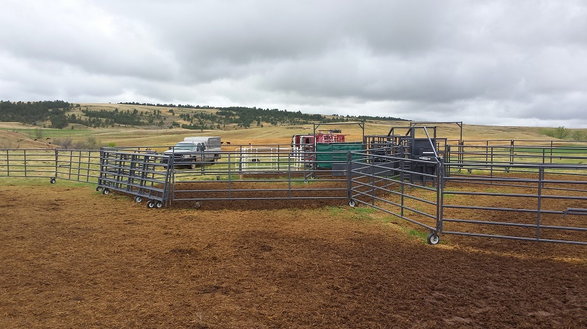 Rawhide Portable Corrals being used for breeding project.