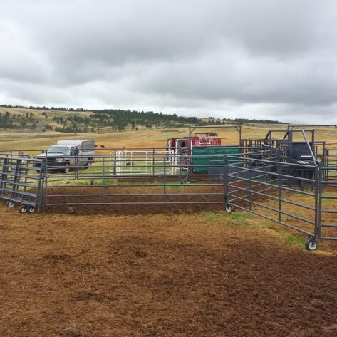 Portable corrals, alleyway, and chute setup for inseminating cattle.