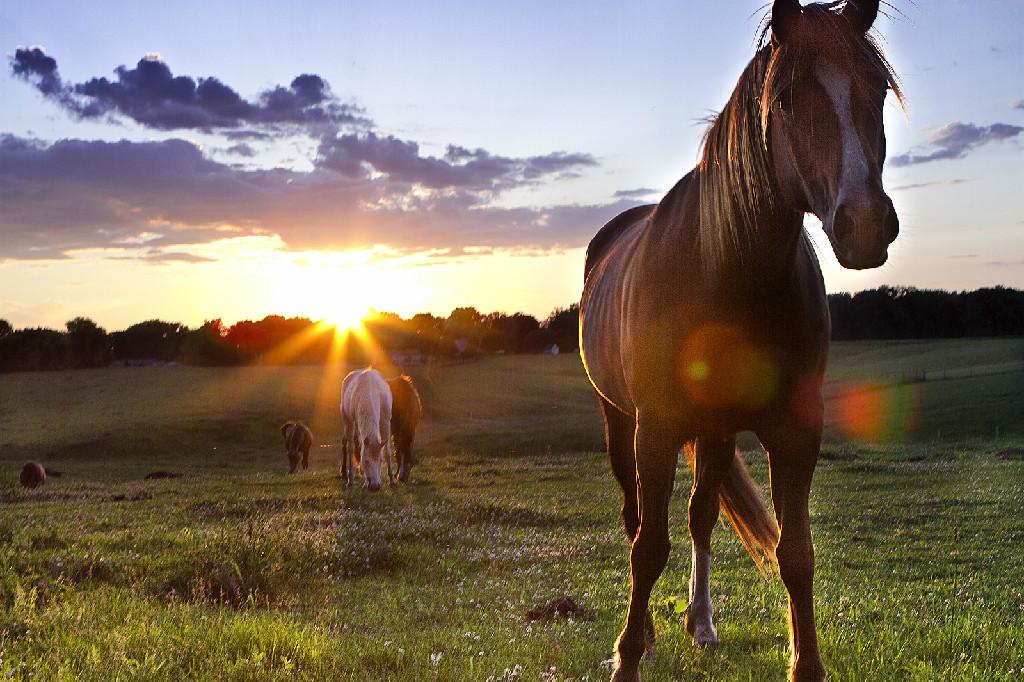 Horse001