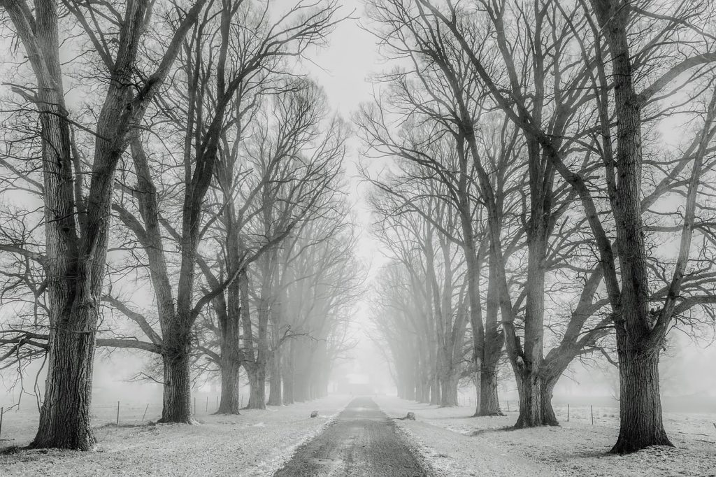 Black & White Forest Path Winter Scene