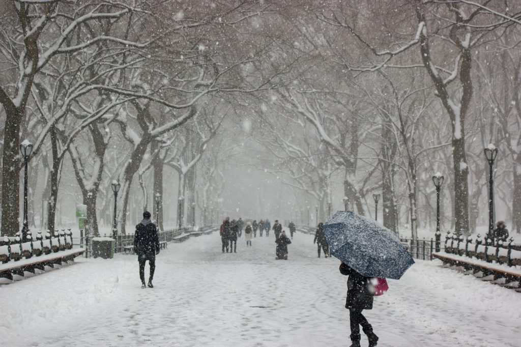 Falling Snow in New York Park Winter Scene