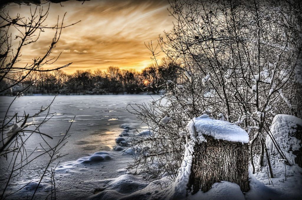 The Frozen Water's Edge Winter Scene