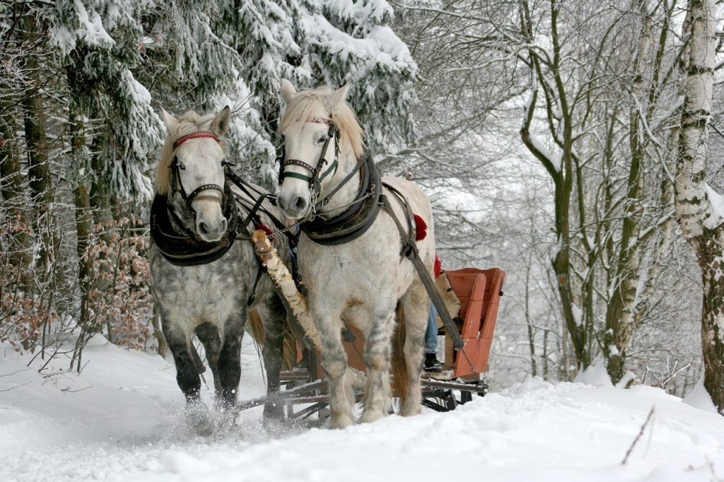 Winter Sleigh Ride Winter Scene