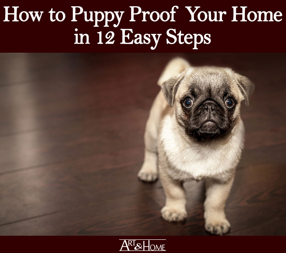 How to Puppy Proof Your Home | Clean, Clean, Clean