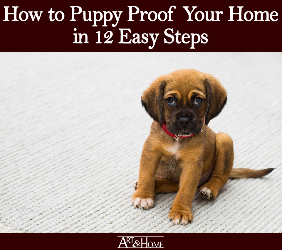 How to Puppy Proof Your Home | Put Away Irreplaceable Items