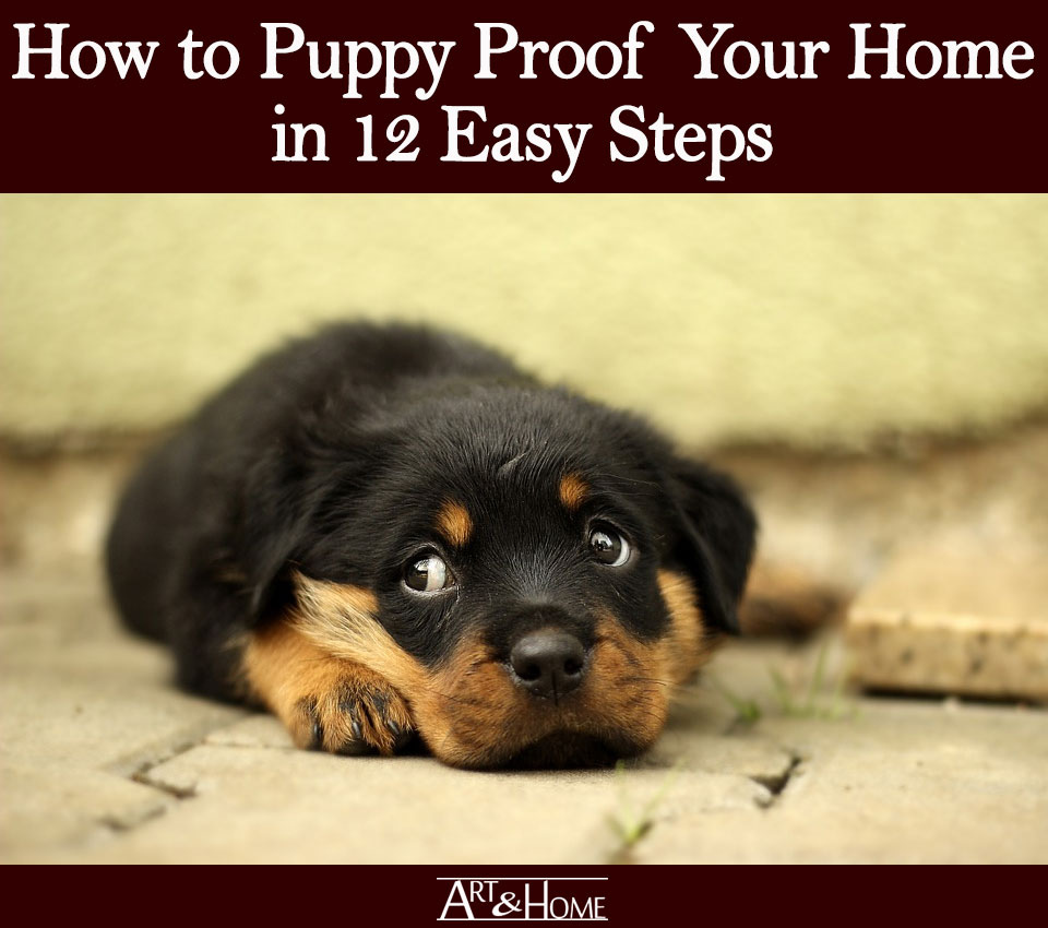 How to Puppy Proof Your Home | Beware of Heights