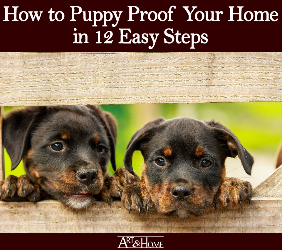 How to Puppy Proof Your Home | Create a Safe Space for your Puppy