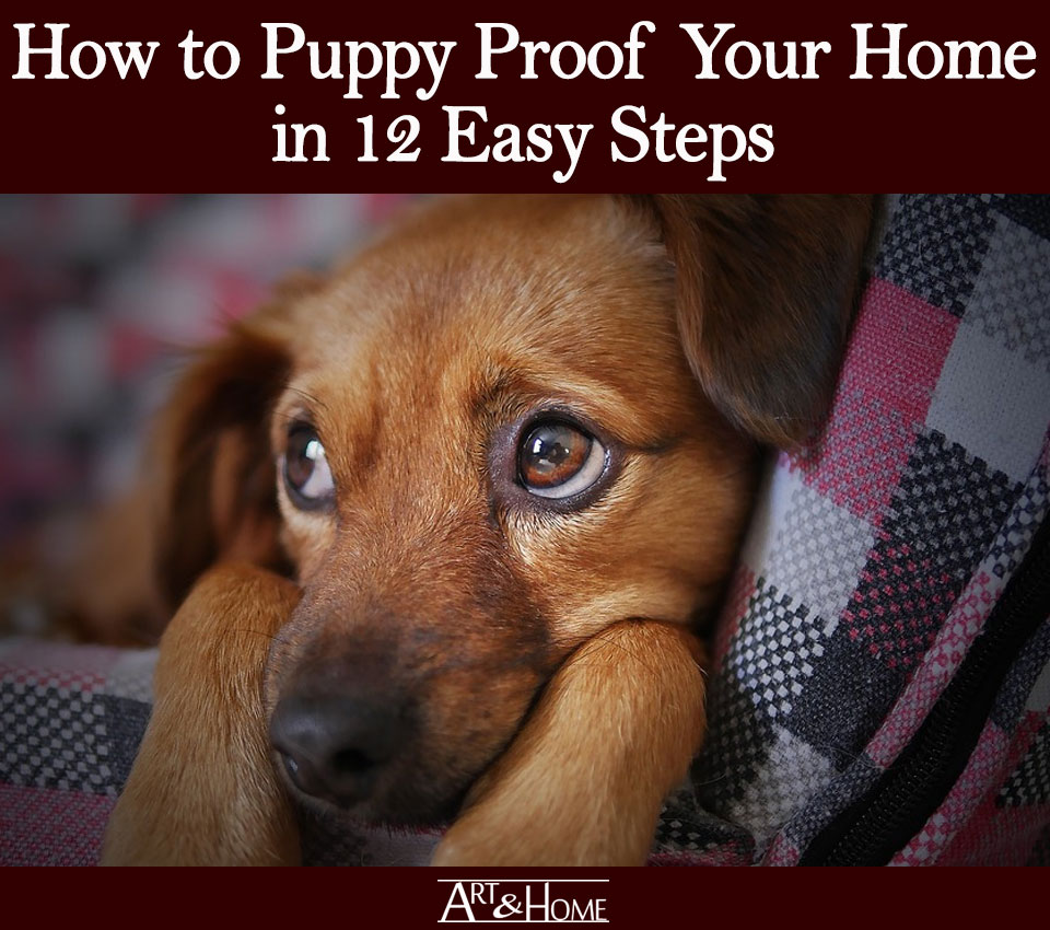 How to Puppy Proof Your Home | Create Puppy Proofing Boundaries
