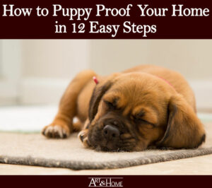 How to Puppy Proof Your Home