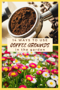 14 Ways to Use Coffee Grounds in the Garden