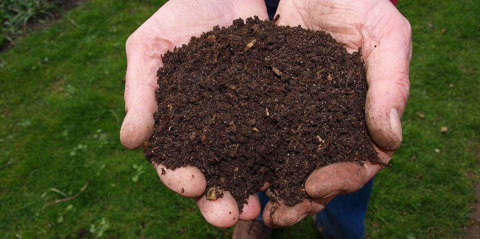 Coffee Grounds in Compost
