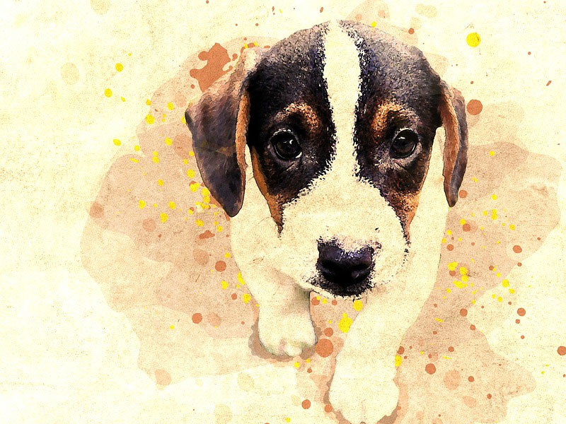 Example of How to Turn Your Favorite Pet Photo into Art