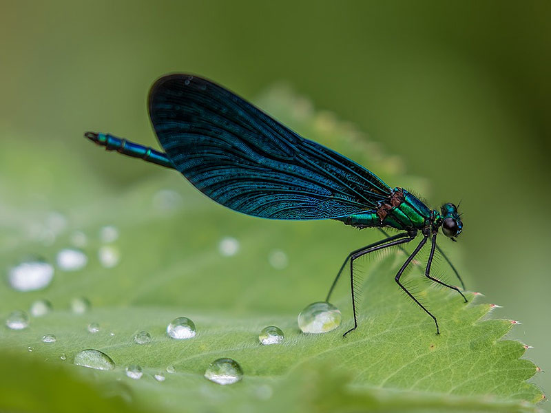 5 Plants That Attract Mosquito-Eating Dragonflies to Your Garden
