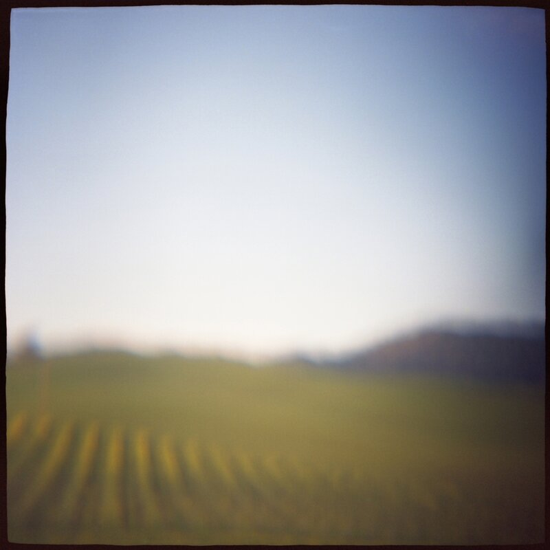 02 Vineyard Daniel Grant Photographic Print