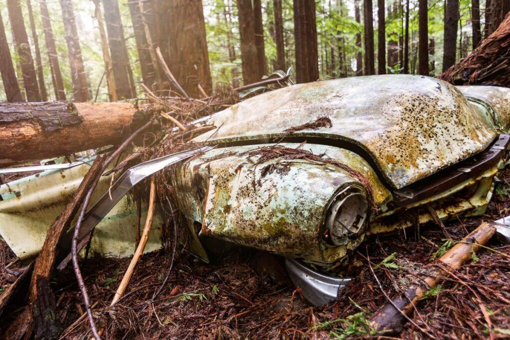 Abandoned Car Crushed by Fallen Tree