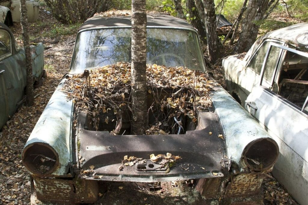 Abandoned Car with Tree Growing Out Of It